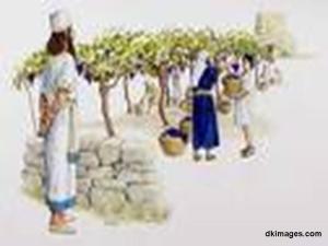 Naboth's Vineyard (270709)